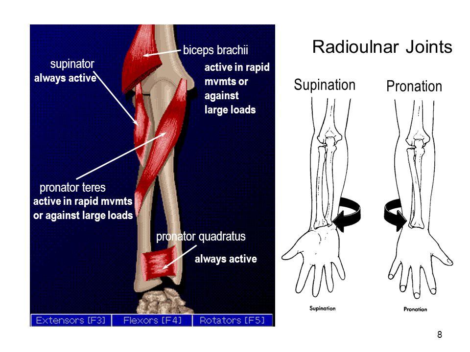 8 Radioulnar Joints pronator teres pronator quadratus supinator biceps brachii Supination Pronation always active active in rapid mvmts or against lar