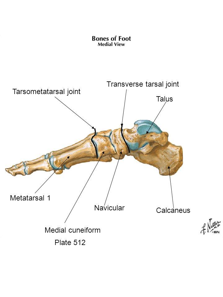 Plate 512 Calcaneus Talus Transverse tarsal joint Tarsometatarsal joint Metatarsal 1 Medial cuneiform Navicular