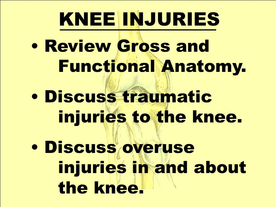 KNEE INJURIES Review Gross and Functional Anatomy. Discuss traumatic injuries to the knee. Discuss overuse injuries in and about the knee.