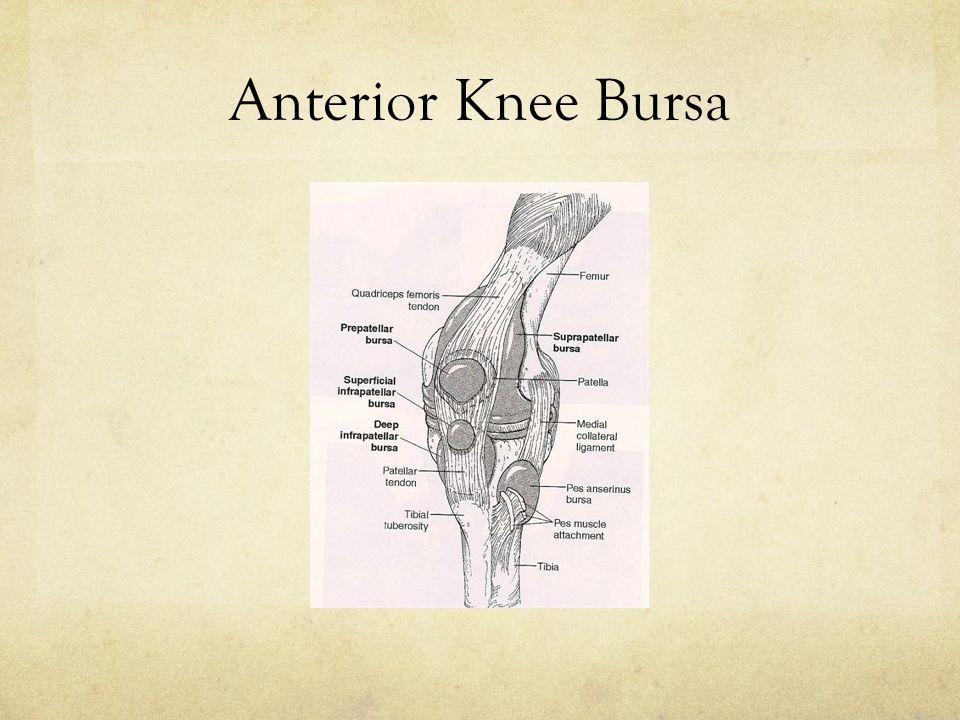 Anterior Knee Bursa