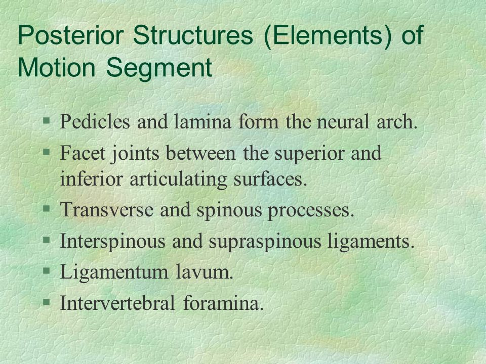 Posterior Structures (Elements) of Motion Segment §Pedicles and lamina form the neural arch. §Facet joints between the superior and inferior articulat