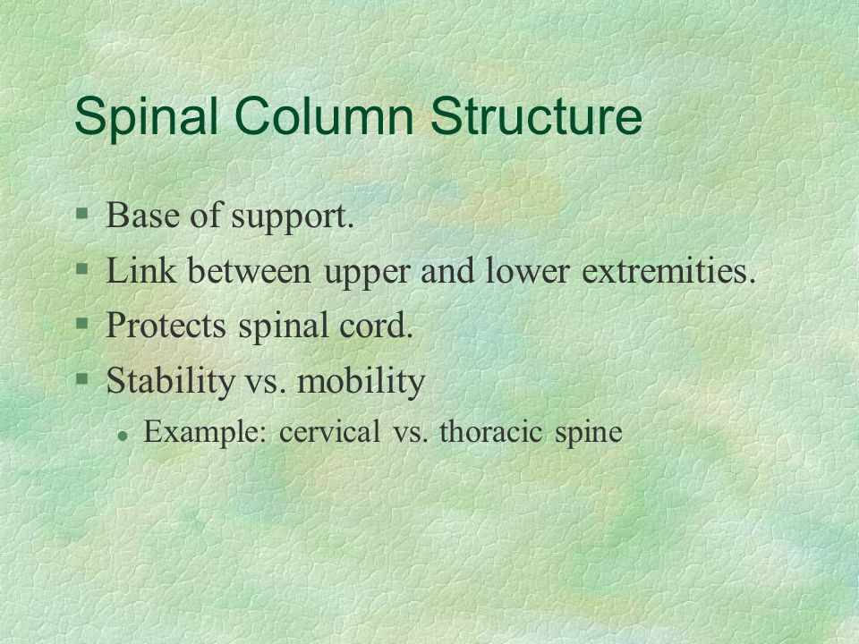 Spinal Column Structure §Base of support. §Link between upper and lower extremities. §Protects spinal cord. §Stability vs. mobility l Example: cervica