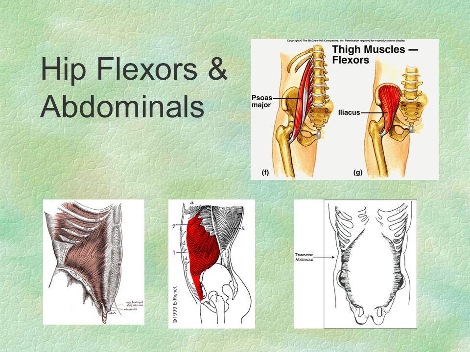Hip Flexors & Abdominals