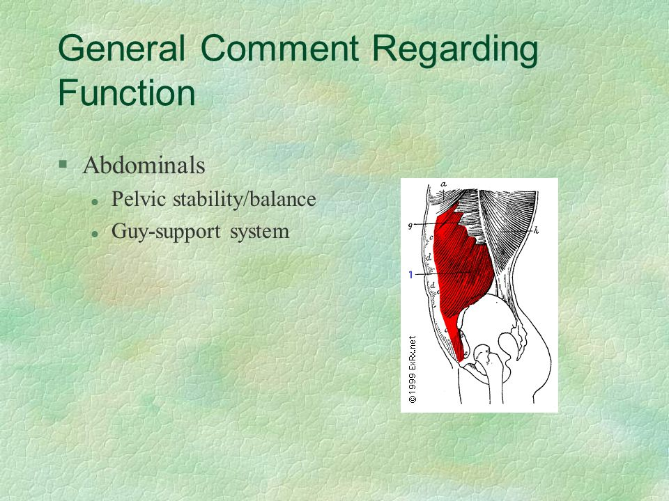 General Comment Regarding Function §Abdominals l Pelvic stability/balance l Guy-support system