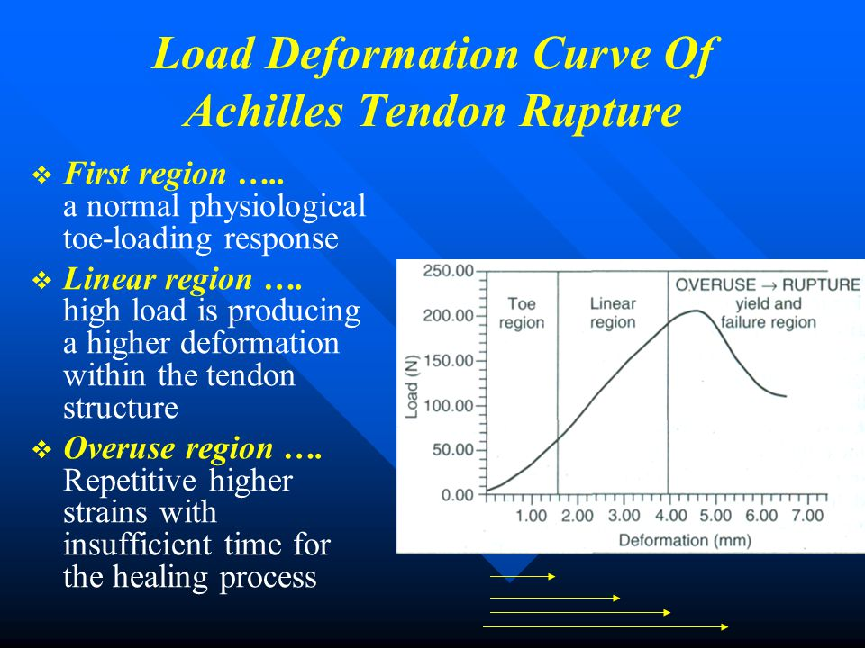 Load Deformation Curve Of Achilles Tendon Rupture   First region ….. a normal physiological toe-loading response   Linear region …. high load is p