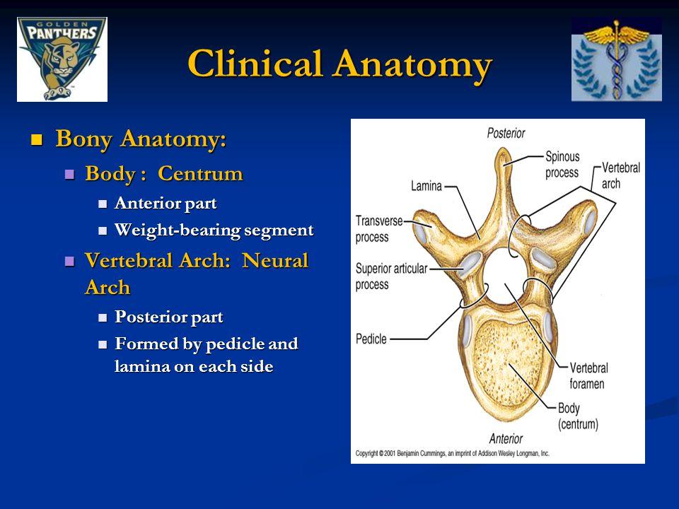 Lumbar spine vertebrae anatomy