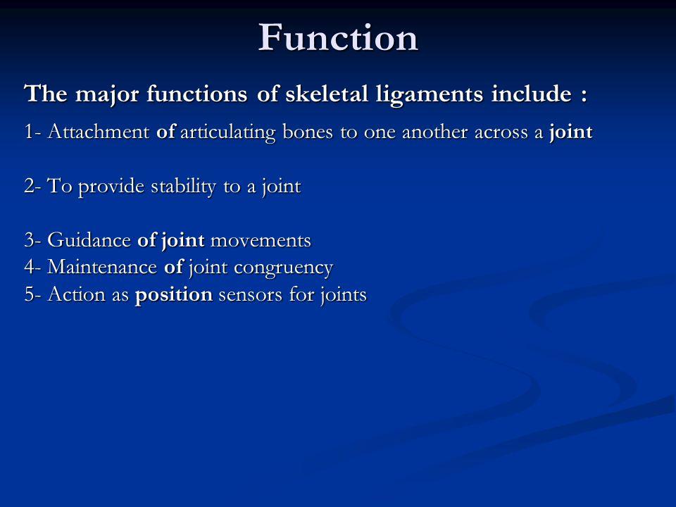 Composition ( Fibroblasts ( Extracellular Matrix ( Collagen=25% ( Proteoglycans=1% ( Elastin<5% ( Water=70%