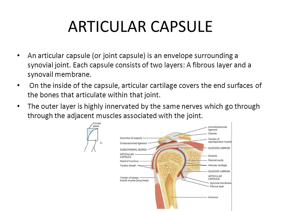 ARTICULAR CAPSULE An articular capsule (or joint capsule) is an envelope surrounding a synovial joint. Each capsule consists of two layers: A fibrous