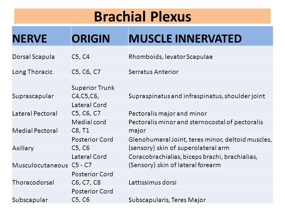 Brachial Plexus NERVEORIGINMUSCLE INNERVATED Dorsal ScapulaC5, C4Rhomboids, levator Scapulae Long ThoracicC5, C6, C7Serratus Anterior Suprascapular Su