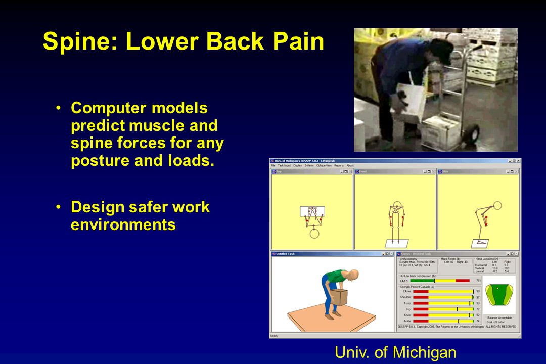 Spine: Lower Back Pain Computer models predict muscle and spine forces for any posture and loads. Design safer work environments Univ. of Michigan