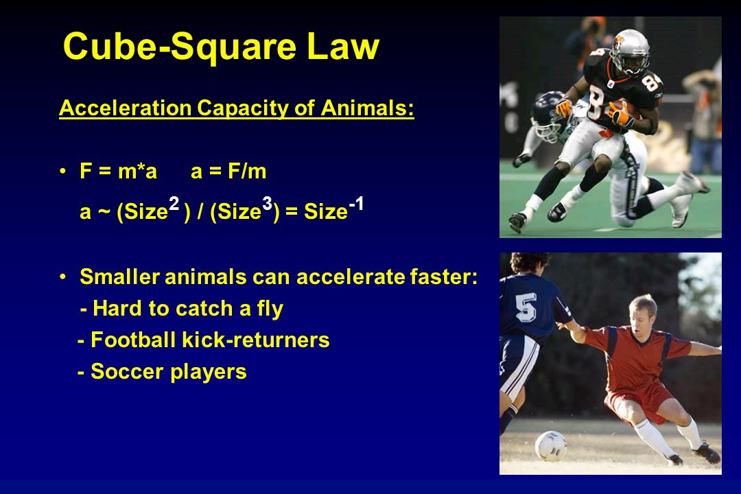 Cube-Square Law Acceleration Capacity of Animals: F = m*a a = F/m a ~ (Size 2 ) / (Size 3 ) = Size -1 Smaller animals can accelerate faster: - Hard to catch a fly - Football kick-returners - Soccer players