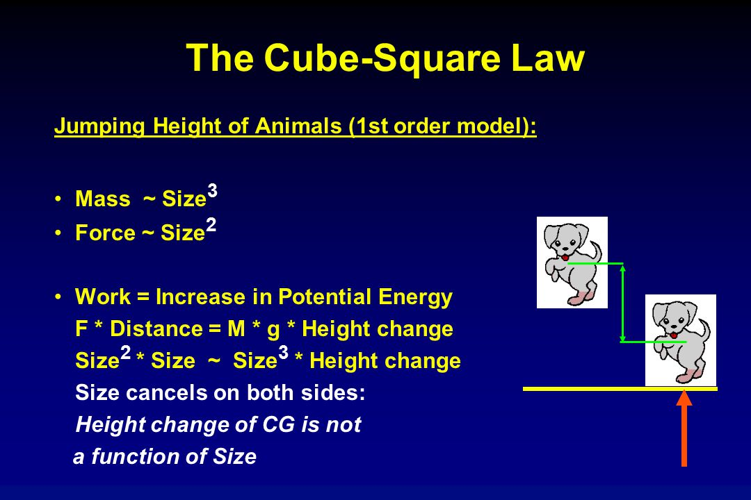 The Cube-Square Law Jumping Height of Animals (1st order model): Mass ~ Size 3 Force ~ Size 2 Work = Increase in Potential Energy F * Distance = M * g * Height change Size 2 * Size ~ Size 3 * Height change Size cancels on both sides: Height change of CG is not a function of Size