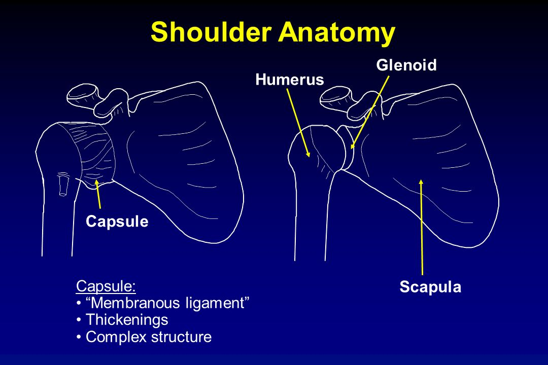 "Shoulder Anatomy Humerus Scapula Capsule Glenoid Capsule: ""Membranous ligament"" Thickenings Complex structure"