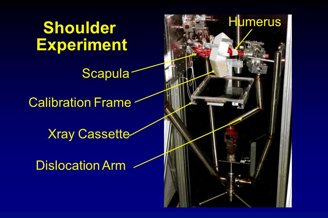 Shoulder Experiment Scapula Calibration Frame Xray Cassette Dislocation Arm Humerus