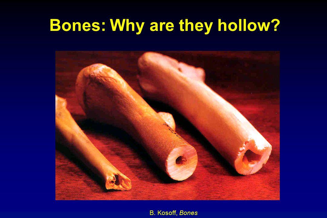 Bones: Why are they hollow? B. Kosoff, Bones