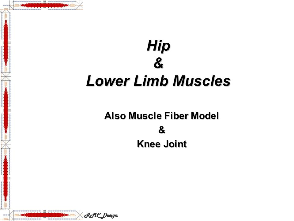 Hip & Lower Limb Muscles Also Muscle Fiber Model & Knee Joint RMC Design