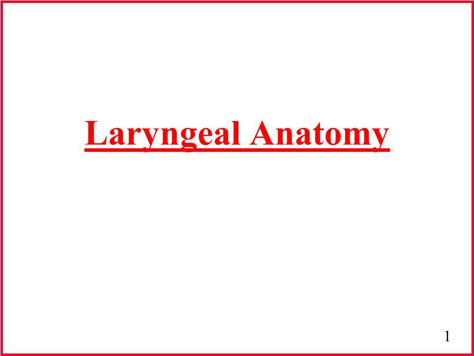 12 Larynx & Trachea Hyoid Bone Thyroid Cartilage Cricoid Cartilage Tracheal Ring