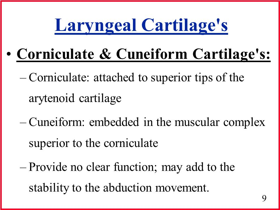 20 Laryngeal Membranes & Ligaments Intrinsic Laryngeal Membranes: Interconnects the various laryngeal cartilages and helps regulate the extent & direction of their movement –Conus Elasticus –Quadrangle membrane –Aryepiglottic folds –Lateral cricothyroid membrane