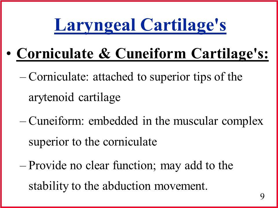 10 Laryngeal Cartilage s 3 Unpaired Cartilage s - Epiglottis -Thyroid -Cricoid