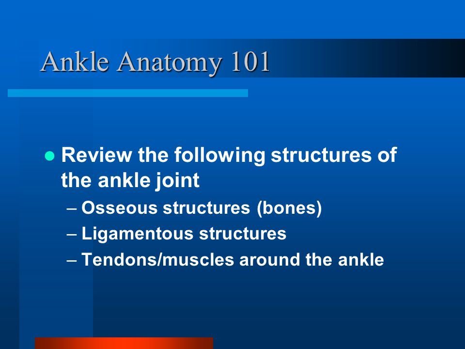 Bony Anatomy of Ankle Tibia and fibula bound together by the ant.