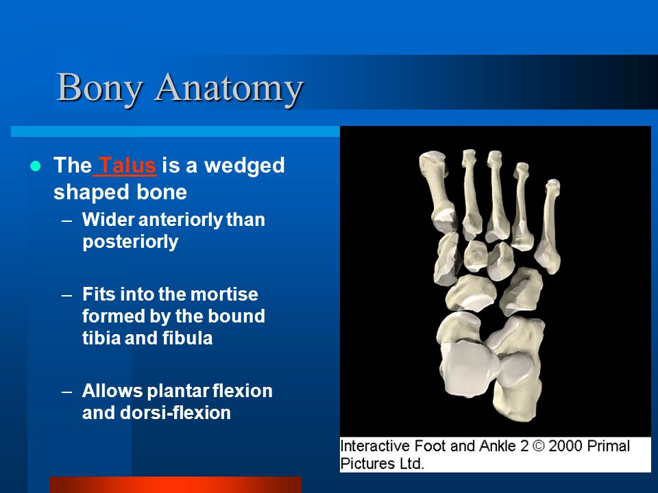 Grade III Ankle Sprain Ligament Status –Complete tear and loss of integrity of a ligament.