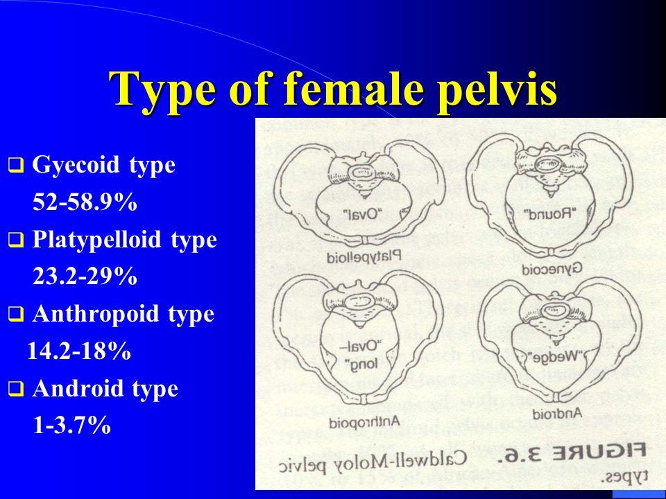 External genital organs  mons pubis: fatty tissue  labia majora  labia minora which lie inside the labia majora  clitoris: is located anterior to the labia minora