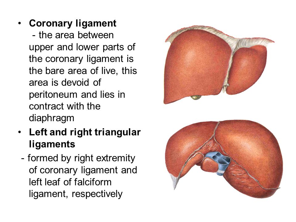 Coronary ligament - the area between upper and lower parts of the coronary ligament is the bare area of live, this area is devoid of peritoneum and li