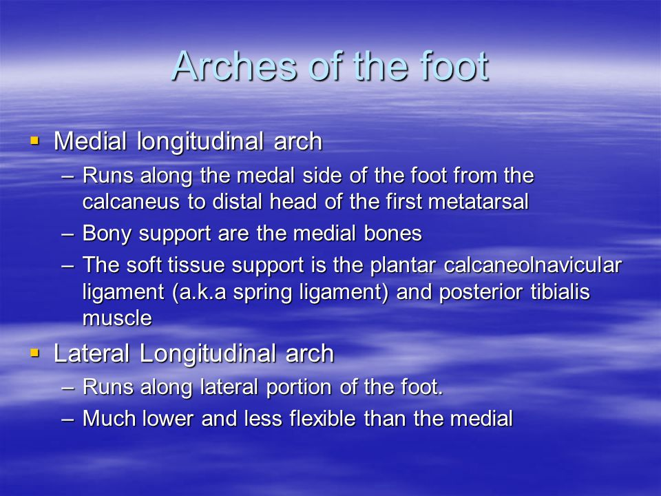 Arches of the foot  Medial longitudinal arch –Runs along the medal side of the foot from the calcaneus to distal head of the first metatarsal –Bony support are the medial bones –The soft tissue support is the plantar calcaneolnavicular ligament (a.k.a spring ligament) and posterior tibialis muscle  Lateral Longitudinal arch –Runs along lateral portion of the foot.