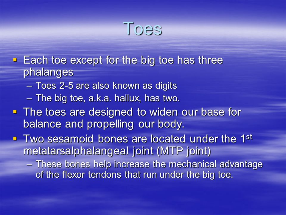 Toes  Each toe except for the big toe has three phalanges –Toes 2-5 are also known as digits –The big toe, a.k.a. hallux, has two.  The toes are des
