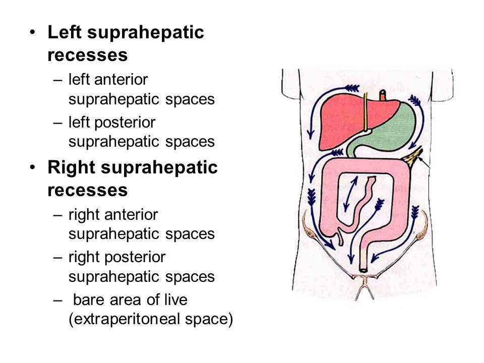 Left suprahepatic recesses –left anterior suprahepatic spaces –left posterior suprahepatic spaces Right suprahepatic recesses –right anterior suprahep