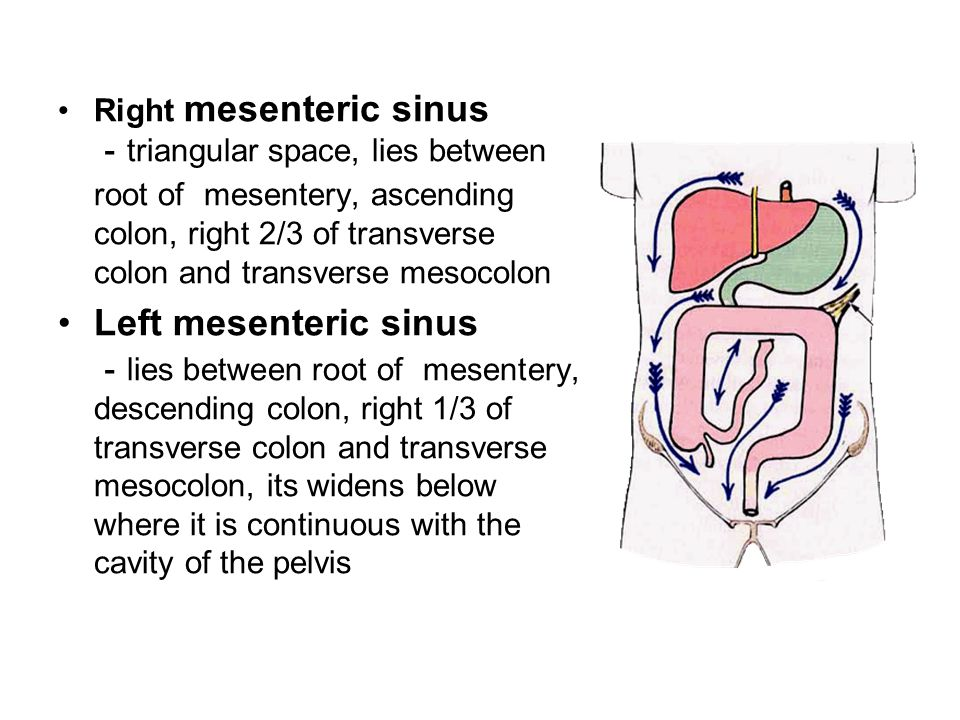 Right mesenteric sinus - triangular space, lies between root of mesentery, ascending colon, right 2/3 of transverse colon and transverse mesocolon Left mesenteric sinus - lies between root of mesentery, descending colon, right 1/3 of transverse colon and transverse mesocolon, its widens below where it is continuous with the cavity of the pelvis