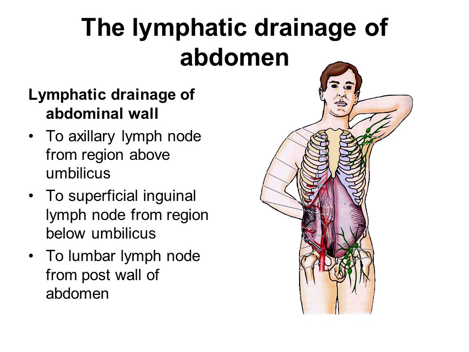 The lymphatic drainage of abdomen Lymphatic drainage of abdominal wall To axillary lymph node from region above umbilicus To superficial inguinal lymph node from region below umbilicus To lumbar lymph node from post wall of abdomen