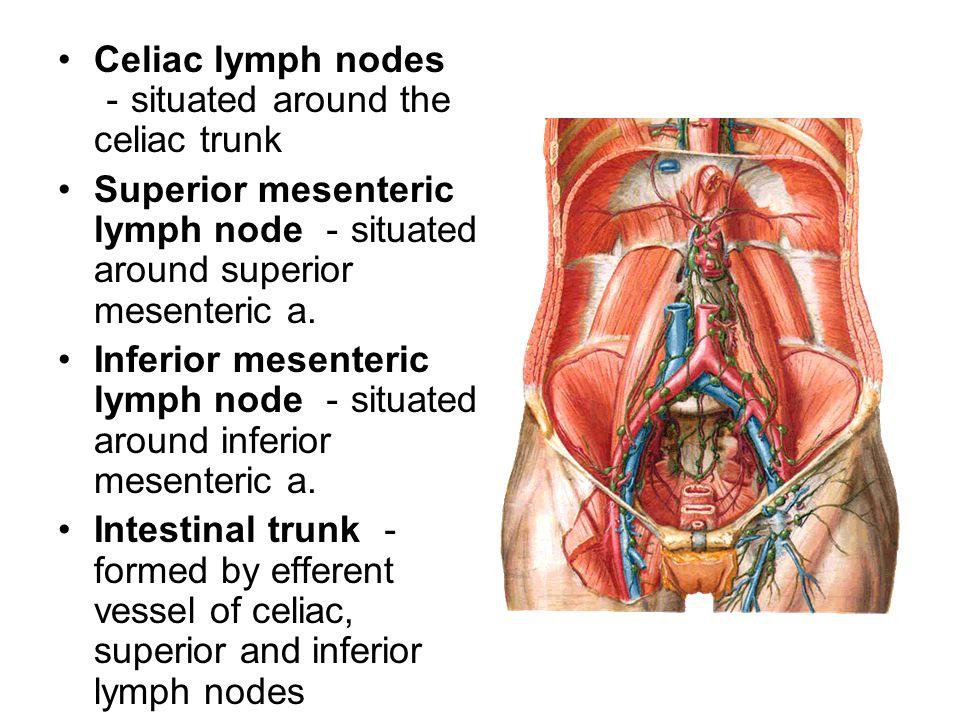 Celiac lymph nodes - situated around the celiac trunk Superior mesenteric lymph node - situated around superior mesenteric a. Inferior mesenteric lymp