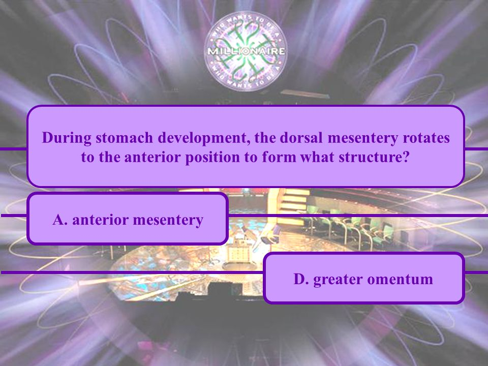 A. anterior mesentery C. lesser omentum B. fusion fascia D. greater omentum During stomach development, the dorsal mesentery rotates to the anterior p