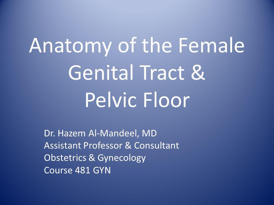 Anatomy of the Female Genital Tract & Pelvic Floor Dr.