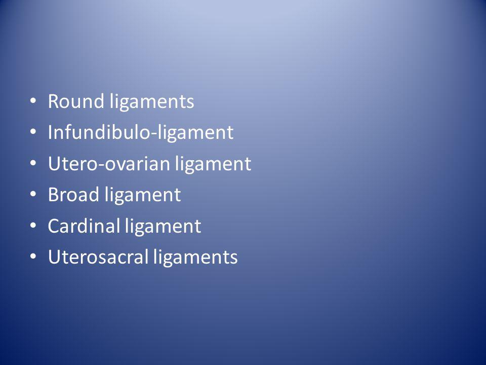 Ligaments Round ligaments Infundibulo-ligament Utero-ovarian ligament Broad ligament Cardinal ligament Uterosacral ligaments