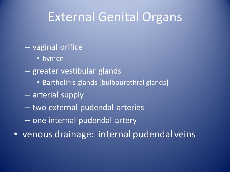 External Genital Organs – vaginal orifice hymen – greater vestibular glands Bartholin's glands [bulbourethral glands] – arterial supply – two external
