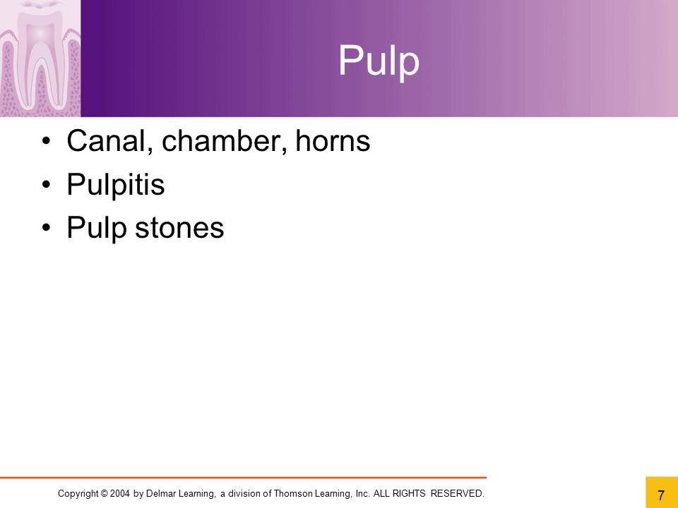 Copyright © 2004 by Delmar Learning, a division of Thomson Learning, Inc. ALL RIGHTS RESERVED. 7 Pulp Canal, chamber, horns Pulpitis Pulp stones