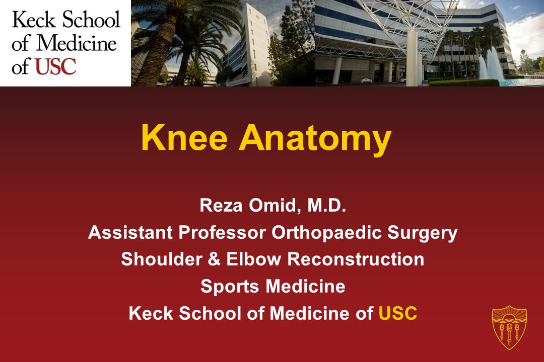 Knee Anatomy Reza Omid, M.D. Assistant Professor Orthopaedic Surgery Shoulder & Elbow Reconstruction Sports Medicine Keck School of Medicine of USC