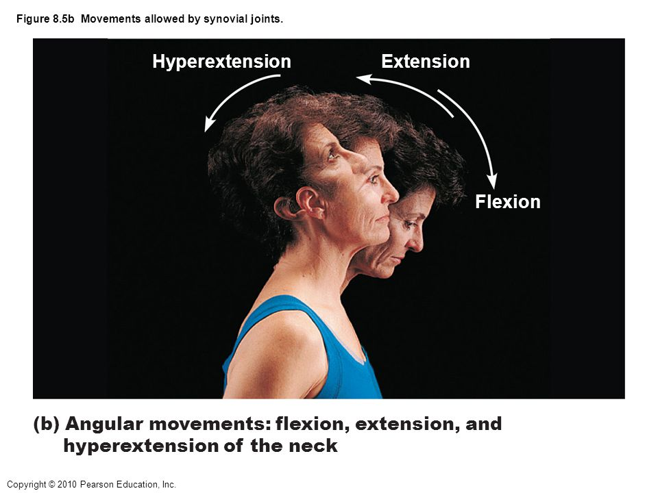 Copyright © 2010 Pearson Education, Inc. Figure 8.5b Movements allowed by synovial joints. (b) Angular movements: flexion, extension, and hyperextensi