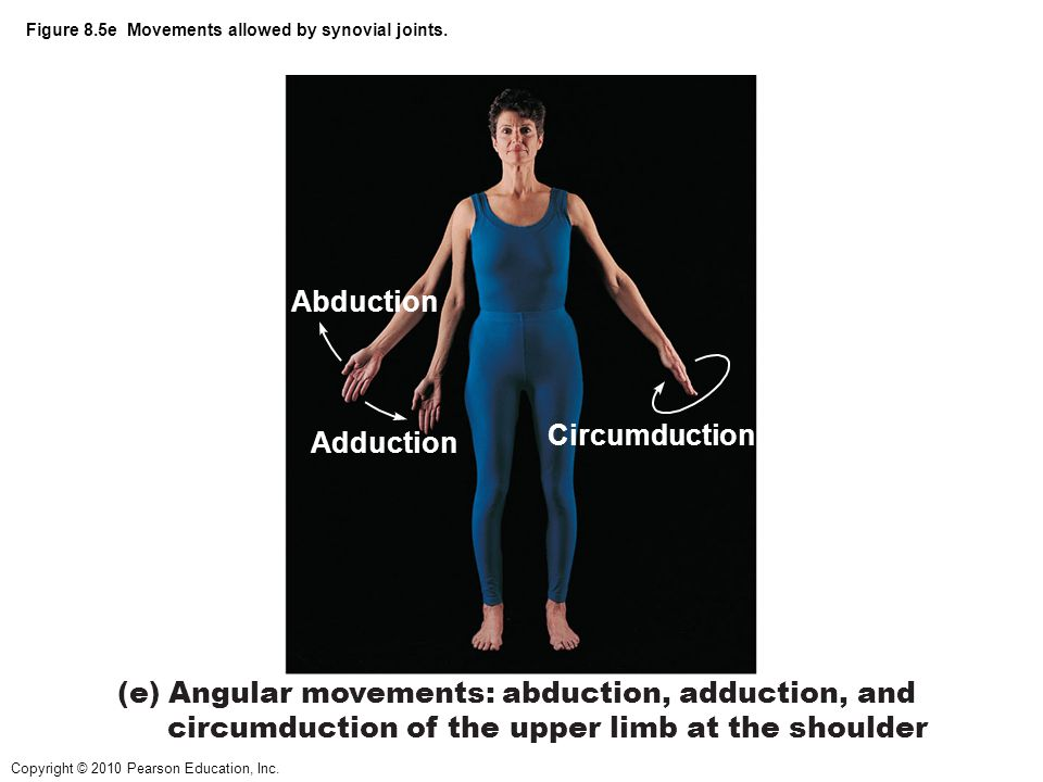 Copyright © 2010 Pearson Education, Inc. Figure 8.5e Movements allowed by synovial joints. Abduction Adduction (e) Angular movements: abduction, adduc