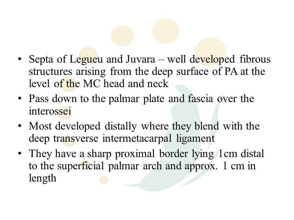 viagra script
