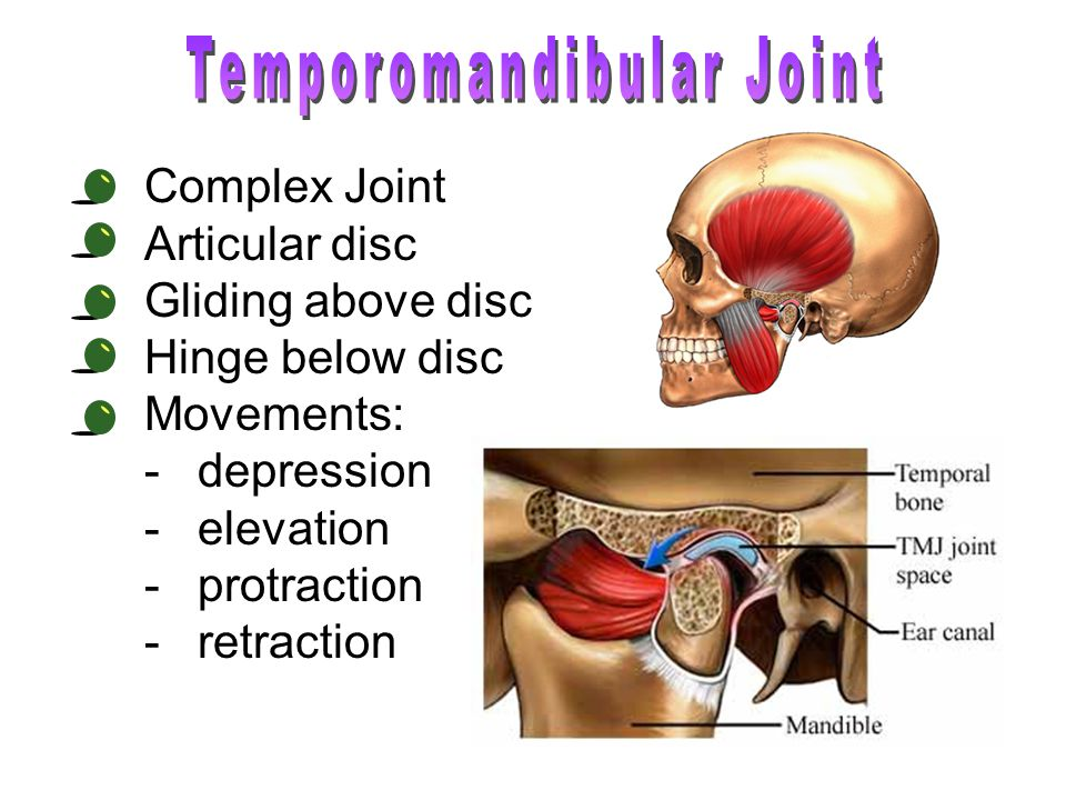 Complex Joint Articular disc Gliding above disc Hinge below disc Movements: -depression -elevation -protraction -retraction