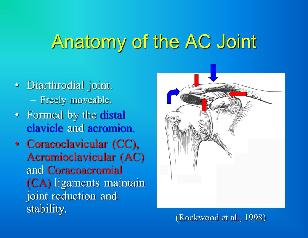 Anatomy of the AC Joint Diarthrodial joint.Diarthrodial joint.
