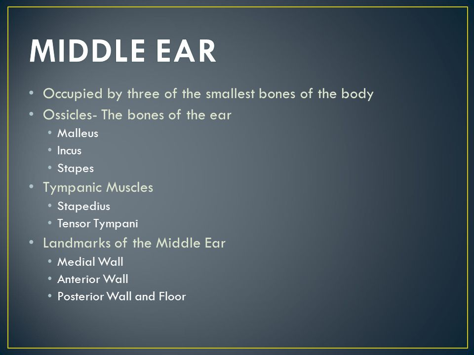 Occupied by three of the smallest bones of the body Ossicles- The bones of the ear Malleus Incus Stapes Tympanic Muscles Stapedius Tensor Tympani Land