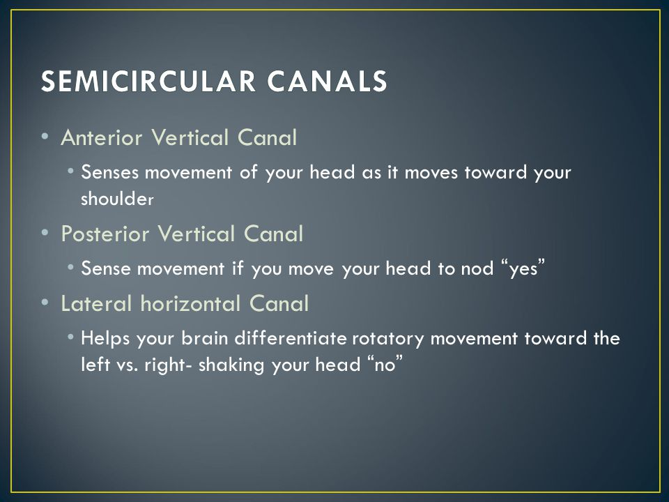 Anterior Vertical Canal Senses movement of your head as it moves toward your shoulde r Posterior Vertical Canal Sense movement if you move your head t