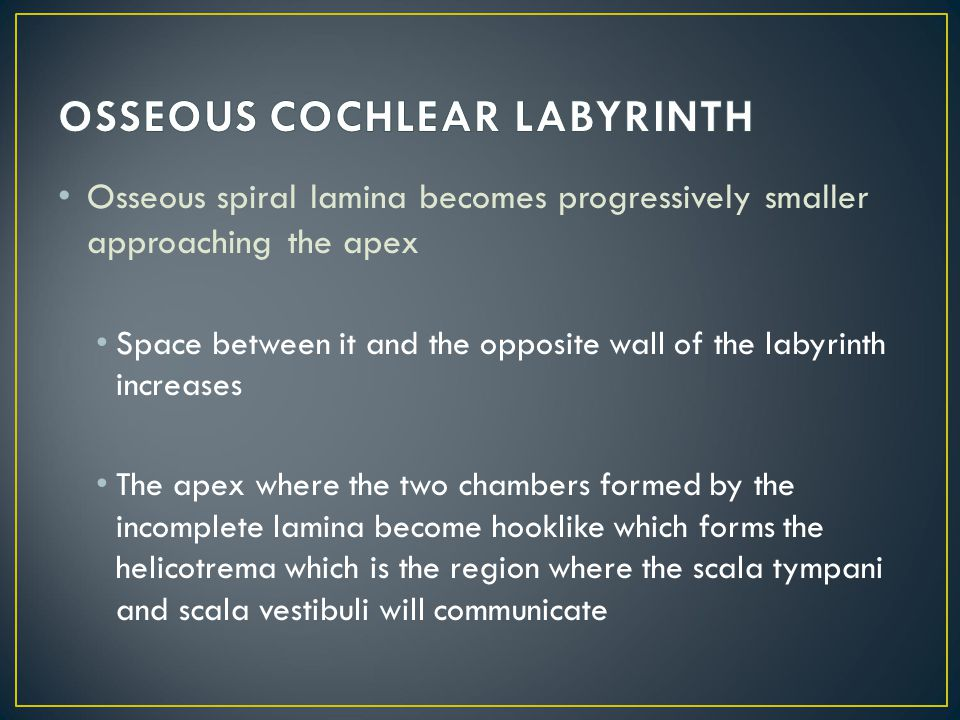 Osseous spiral lamina becomes progressively smaller approaching the apex Space between it and the opposite wall of the labyrinth increases The apex wh