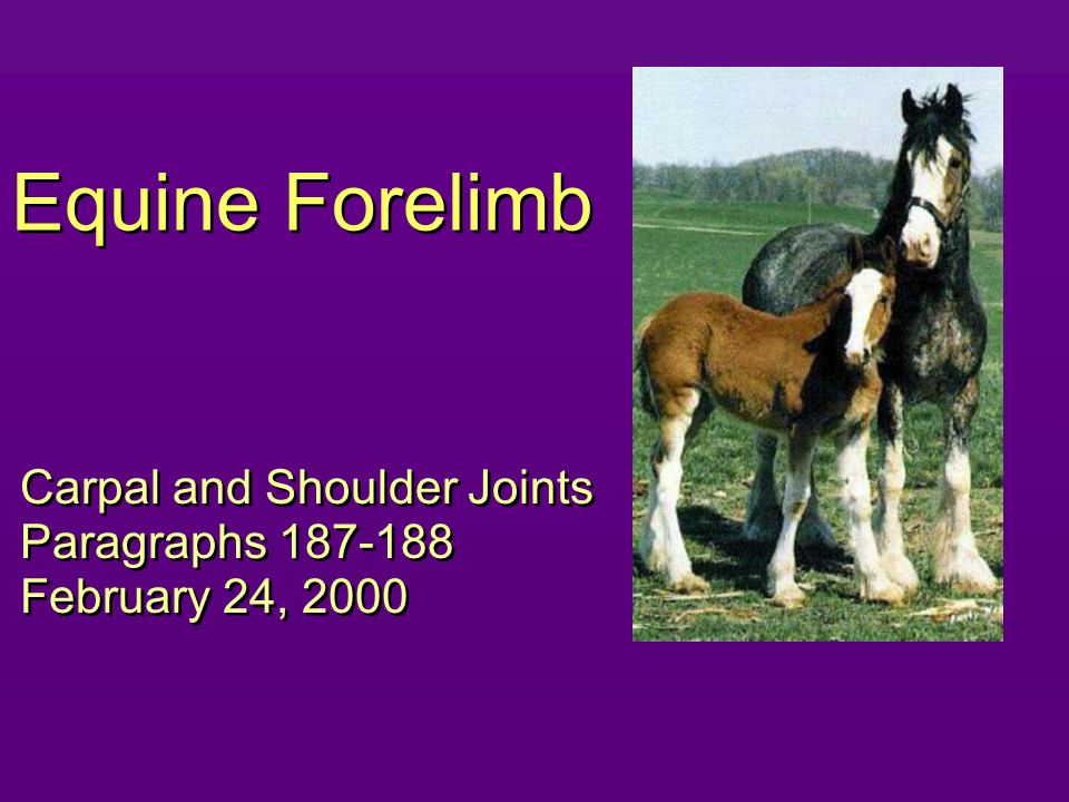 Equine Forelimb Carpal and Shoulder Joints Paragraphs 187-188 February 24, 2000 Carpal and Shoulder Joints Paragraphs 187-188 February 24, 2000