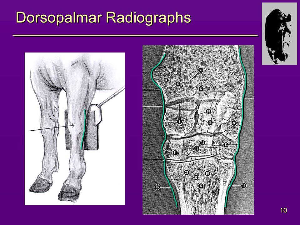 10 Dorsopalmar Radiographs