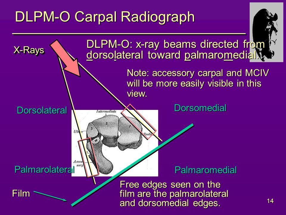 14 DLPM-O Carpal Radiograph Dorsolateral Dorsomedial Palmarolateral Palmaromedial DLPM-O: x-ray beams directed from dorsolateral toward palmaromedial.